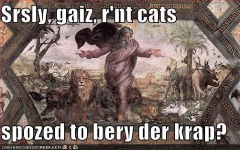 srsly cats bery der krap