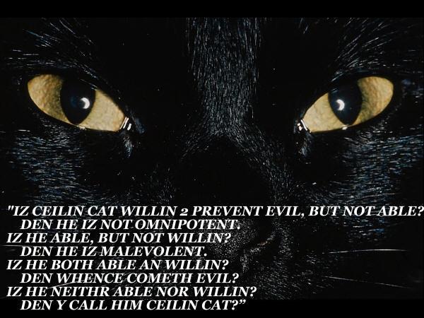 DEN Y CALL HIM CEILIN CAT?